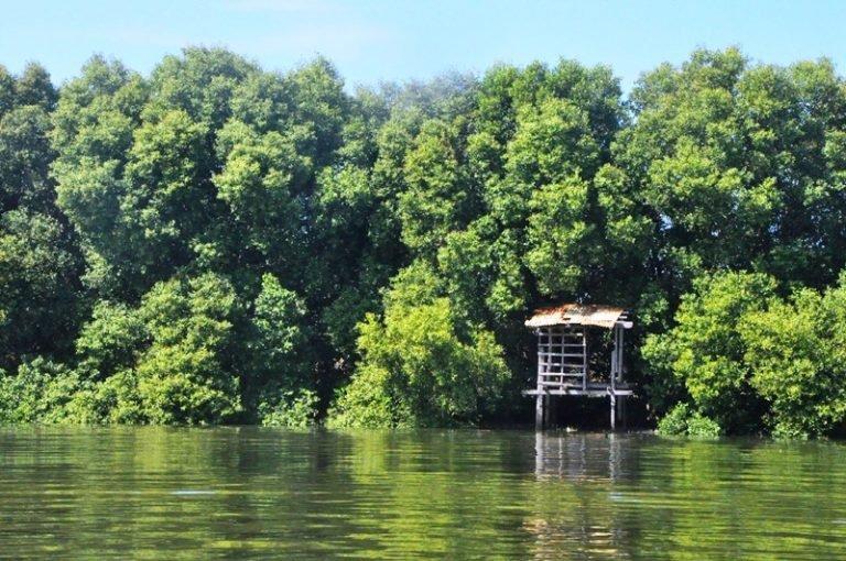 Mangrove forest in Brgy.Taliptip, Bulakan, Bulacan. Photo by Kalikasan-PNE.